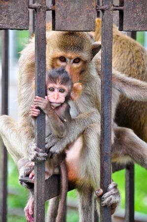 carbuncle: Shy monkeys Editorial