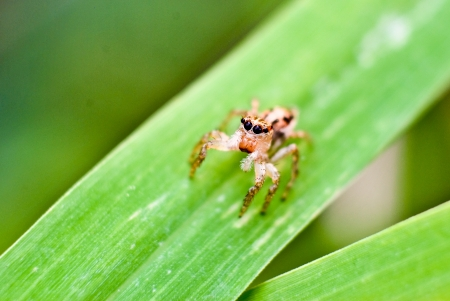 Spider on grass leaf - close up Stock Photo - 16109340