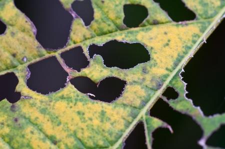 Damaged Leaf -- Closeup Stock Photo - 16302918