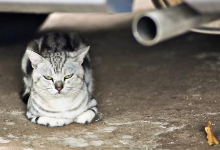 Boring Cat with Cat Exhaust photo