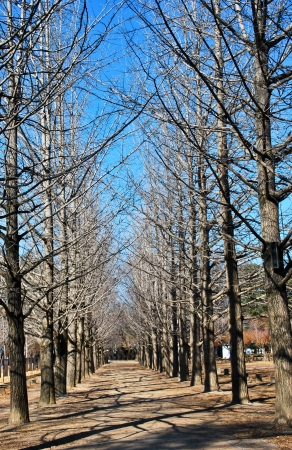 foot bridges: Leafless trees on two sides of walkway