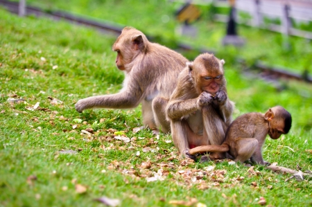 Monkey family eating nut photo