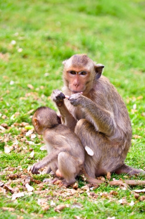 Female monkey with her baby eat nut