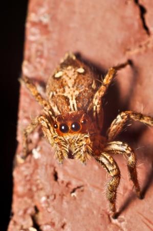 Spider macro photograph