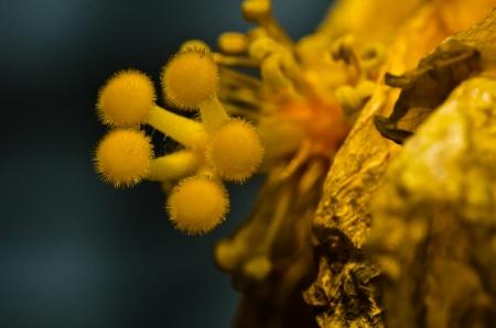 yello: Close up yello pollen