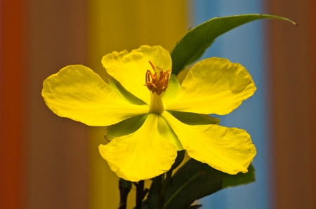 A yellow flower close up photo