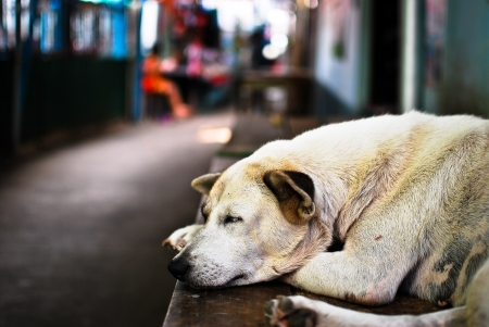 Sleeping street dog photo