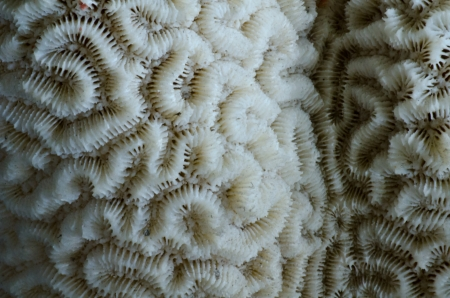 sea coral close up Stock Photo - 17945158