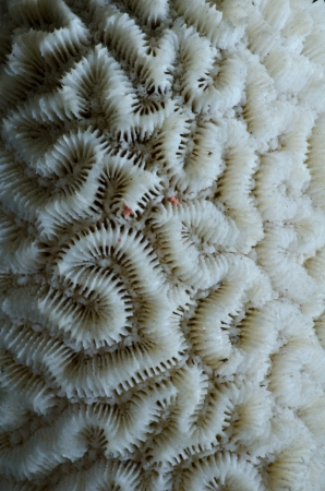 sea coral close up Stock Photo - 17945152