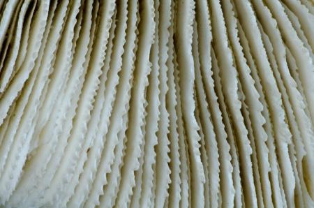 goniopora: sea coral close up Stock Photo