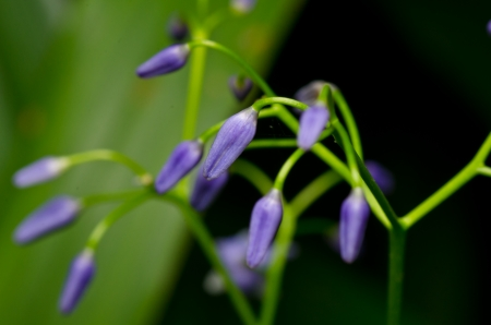 Small perple flower close up photo