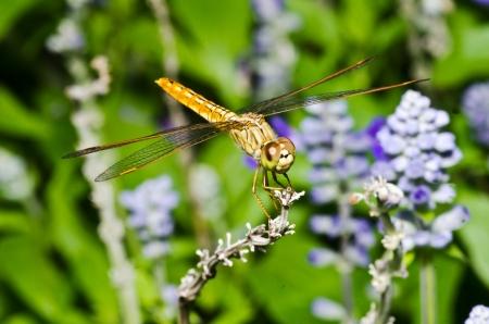 Orange dragon fly macro photo photo