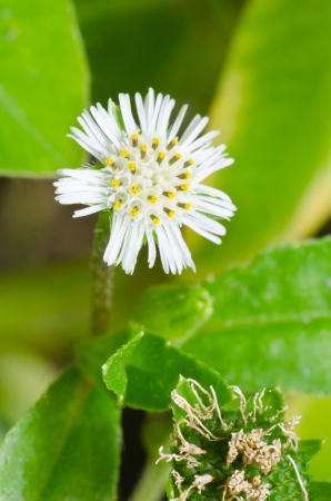 Unusual white flower photo