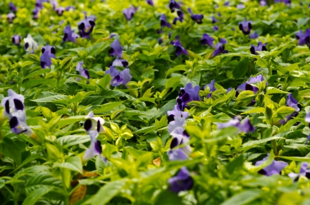 small purple flower: Green leaf and small purple flower texture