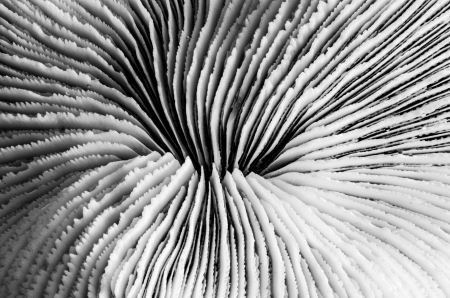 sea coral close up in black and white photograph