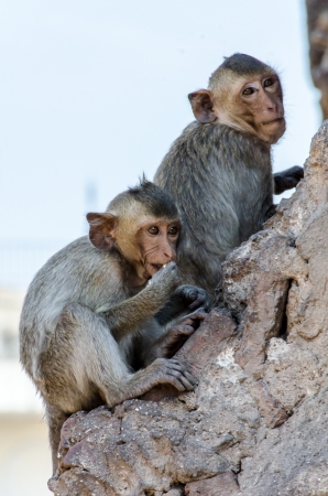 Monkey family activities photo