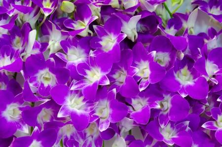 Purple Orchid texture photo