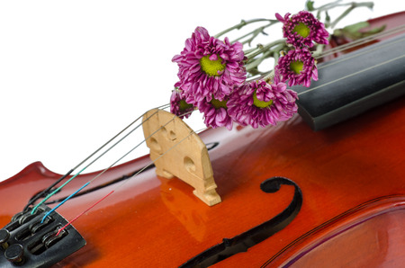 Violin and purple daisy on  white  photo