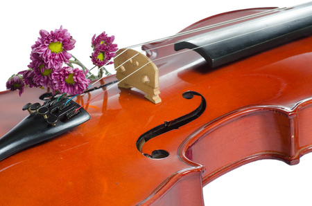 Violin and purple daisy on  white background photo