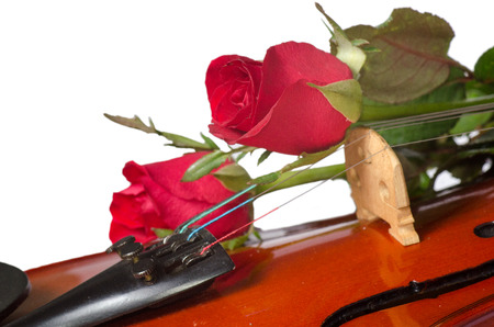 Violin and red roses on white background photo