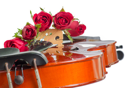 Violin and red roses on white  photo
