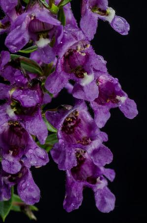 flower bunch: Purple Flower Bunch isolated on black background