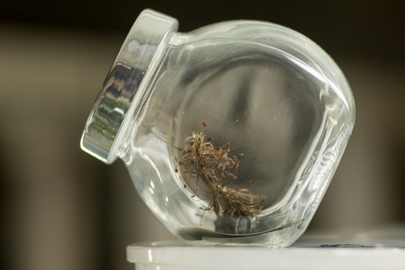 fibrous: Extreme close up of glass jar with brown fibrous sample inside Stock Photo