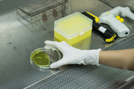 celula animal: Investigador coloca la placa y el equipo c�lula animal en cabina de bioseguridad