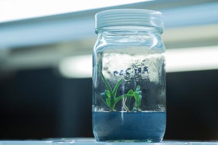 tissue culture: Plant tissue culture
