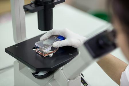 specimen: Female lab technician placing small container with specimen under microscope device in laboratory Stock Photo