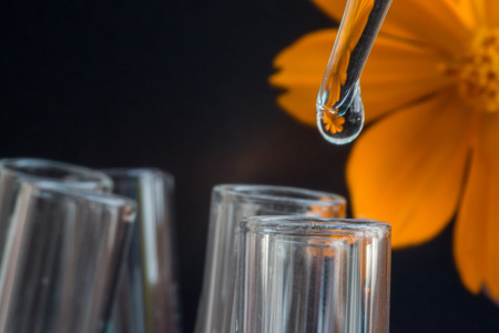 biochemist: Reflection of Sulfur Cosmos flower in water drop on test tube Stock Photo