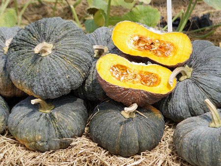 dissect: bulk of tropical pumpkins