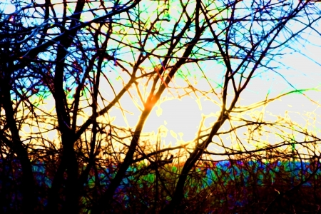 the thicket: A ray of sunshine coming through the thicket branches
