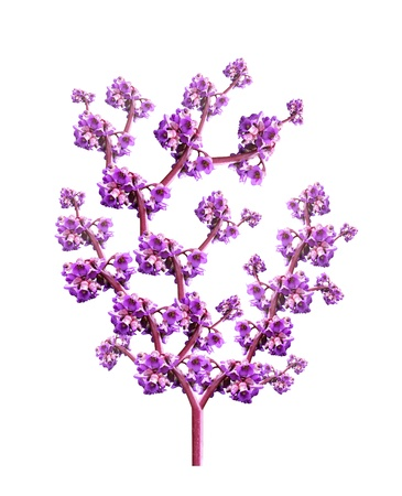 photomontage: Photomontage background for a card in the form of a tree with pink flowers petals on white background Stock Photo