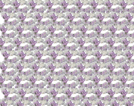 photomontage: Photomontage background of small flowers of white and pink color