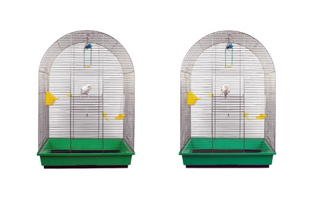 White wavy parrot in a metal cage photo