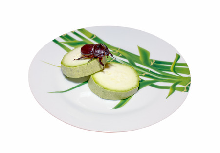 Rhinoceros beetle on slices of zucchini on a plate isolated on white background Stock Photo