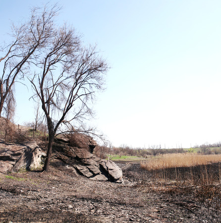 desolation: Burnt cane and desolation on the dry riverbed in shale rocks