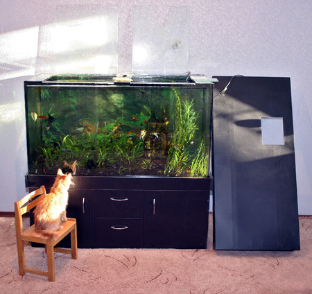 sweetwater: Rectangular large aquarium with the lid open, ready for cleaning, in the room next to which is a red cat Stock Photo
