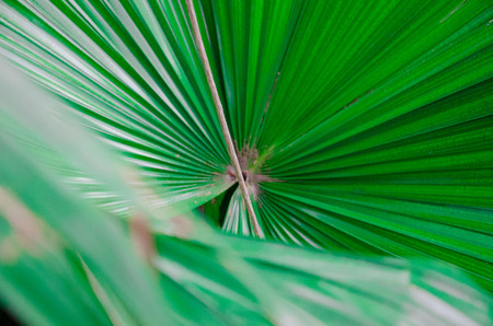 leafs: Palm leafs in circle Stock Photo