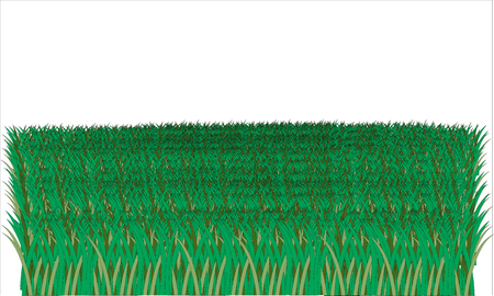 illustrated: Lot of illustrated grass isolated on white background