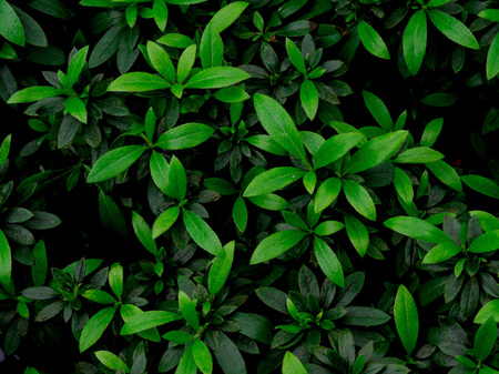 Green leaf texture  leaf texture background  Copy space Stock Photo