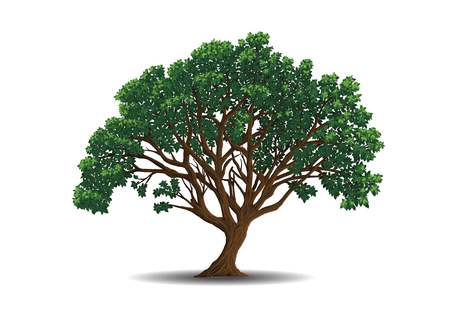 Vector  trees  on white background. illustration.