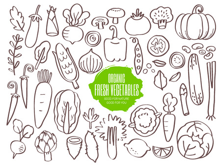 vegetables on white: Set of hand drawn vegetables doodles