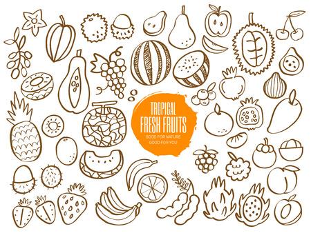 tamarindo: Conjunto de dibujado a mano garabatos de frutas tropicales