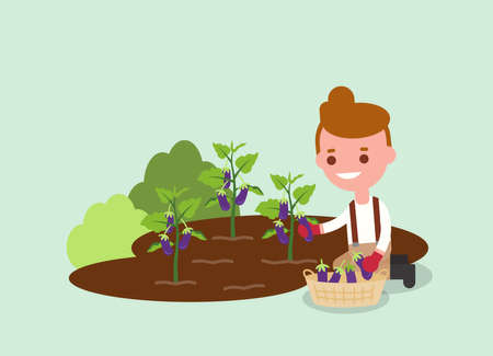 Young Gardener harvesting purple eggplant. Agricultural workers illustration. Vector flat design character.