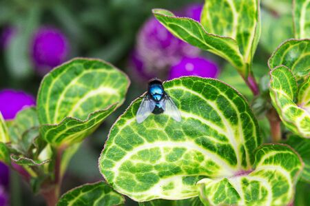 Flies are perched on a leaf in an ornamental plant garden