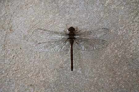 a silhouette dragonfly perched on a wall to rest its wings