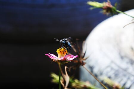Symbiotic flowers and insects at Your Garden