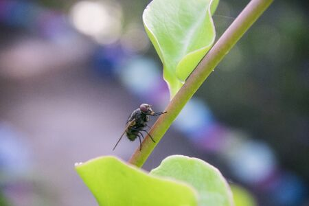 Flies is perched on a leaf in an ornamental plant garden